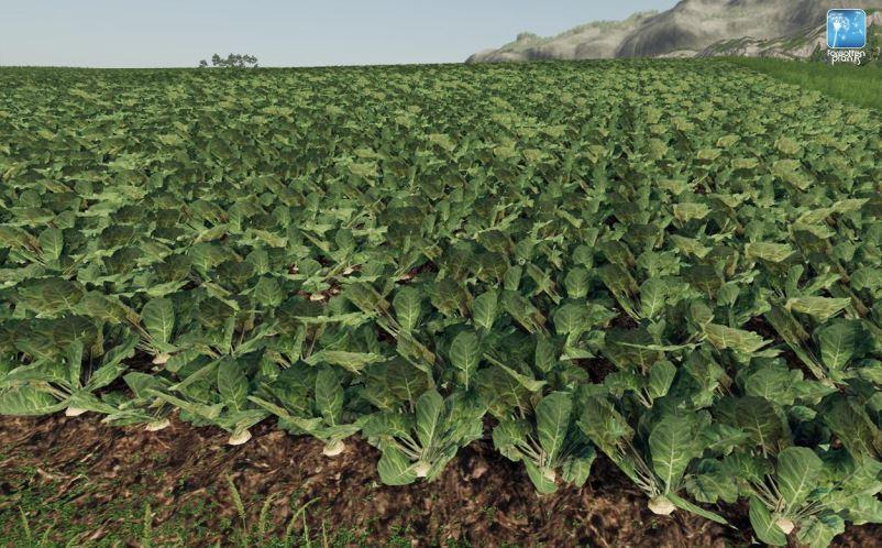Мод Текстуры картофеля, свеклы и редьки v 1.0 для Farming Simulator 2019